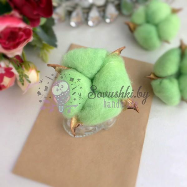 Сухие цветы хлопка, зелёный